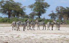 An African Adventure: The 2019 Annual Tanzania Conservation Expedition