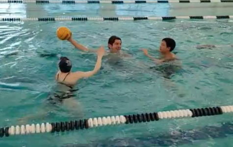 Water Polo Spotlight