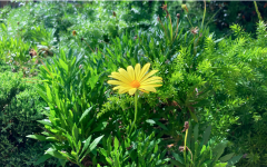 Photo of a flower taken by Megan Gunter to represent the improving environment.