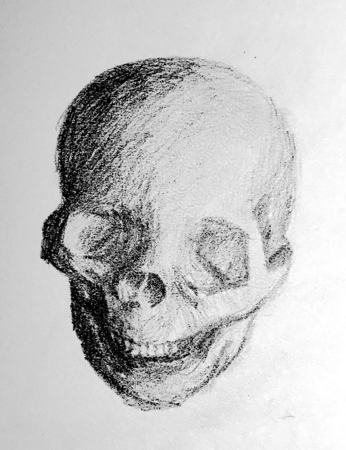 A+skull+drawing+from+the+Life+Drawing+club.%0A
